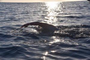 duquesaplaya.com open waters ibiza ultraswim